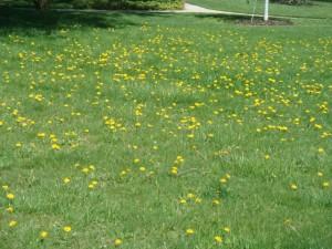 Springtime Grass