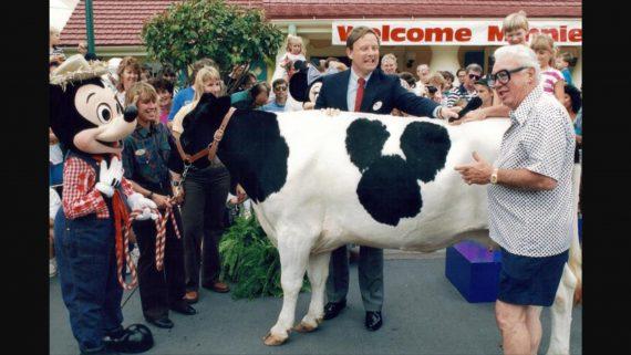 Minnie Moo the Disney cow