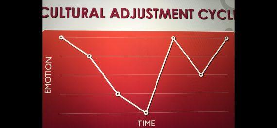 cultural adjustment cycle