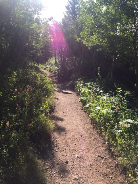 Glacier Park hiking trail