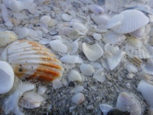 Shelling Is Contagious