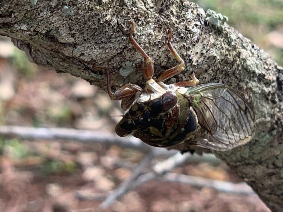 florida bug