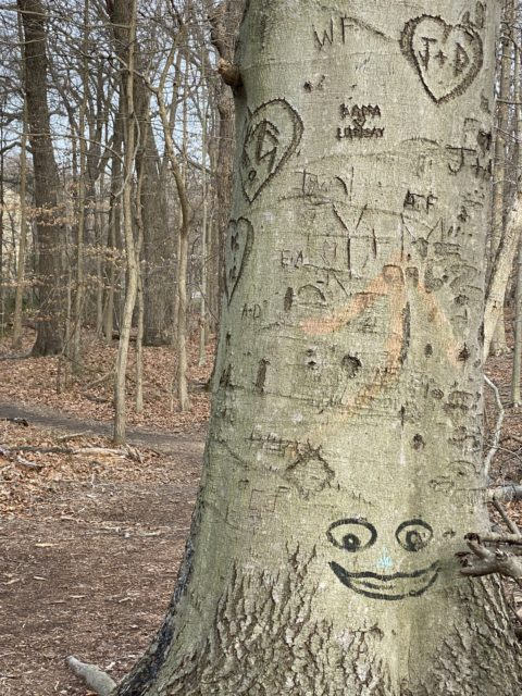 tree carved on