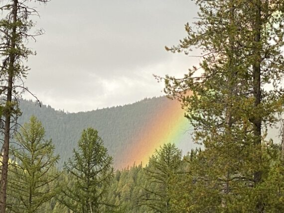 rainbow in pine forest