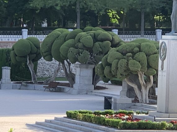 uniquely groomed trees in Spain